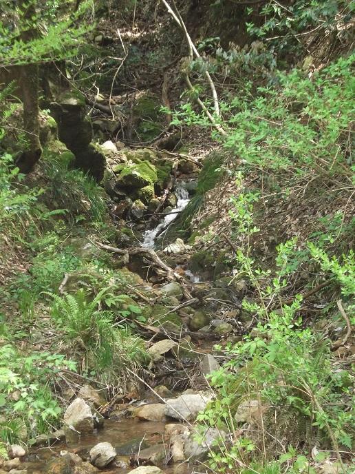 ブログ 自然風景